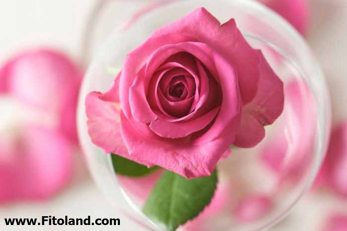 Gain-Cheeks-Rose-Water