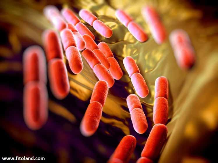 نقش پروبیوتیکها در درمان کولیک نوزادی