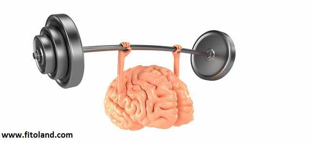 کولین: حافظ سلامت مغز