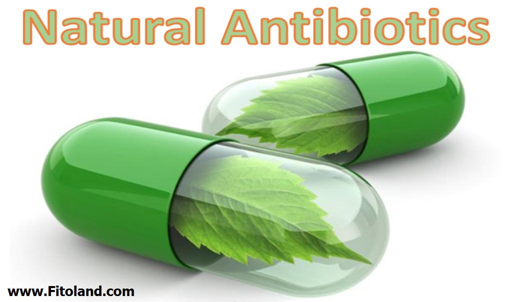 انواع آنتی بیوتیک طبیعی