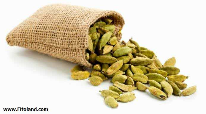 Plants Suitable For Weight Loss Cardamom