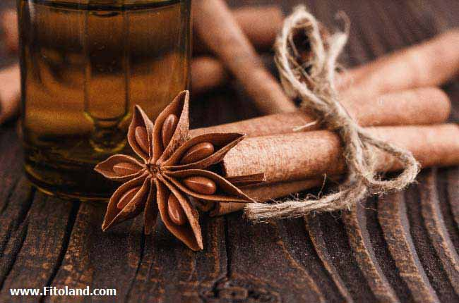 Plants Suitable For Weight Loss Cinnamon