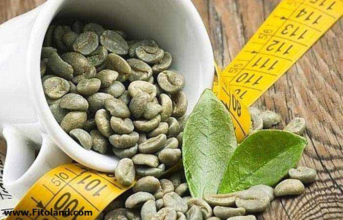 Plants Suitable For Weight Loss Green Coffee