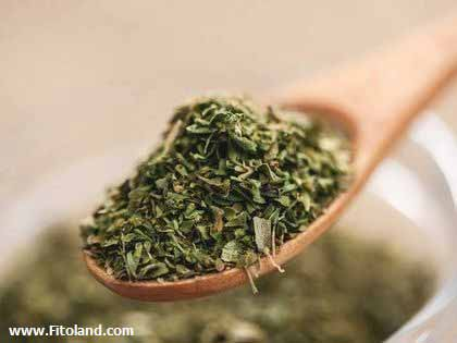 Plants Suitable For Weight Loss Oregano Plant