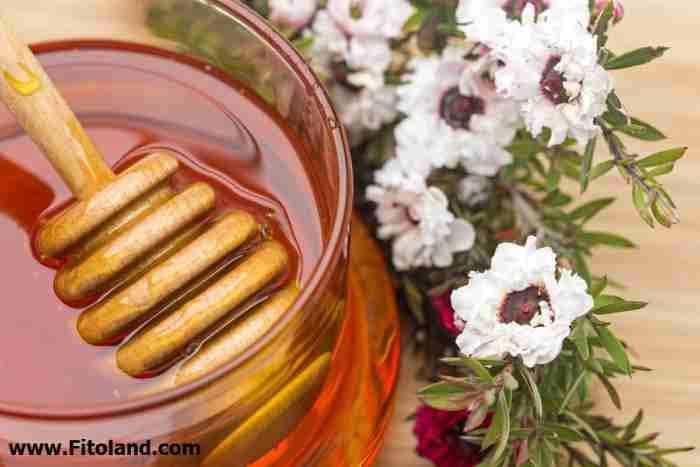 کاربرد عسل در درمان بیماریها