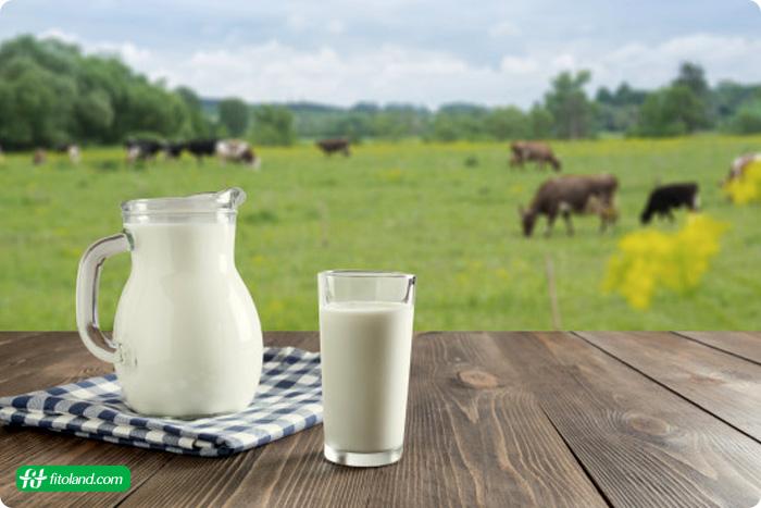 اهمیت مصرف شیر