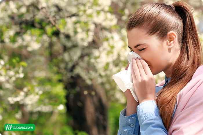 خواص درمانی گرده گل در درمان آلرژی