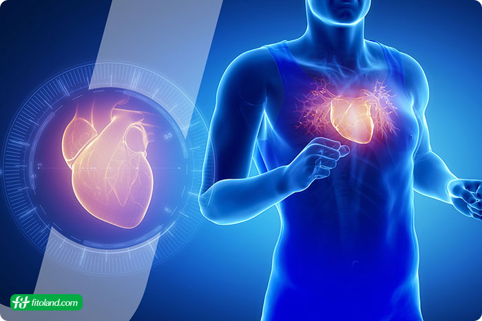 ارتباط ورزش با بیماریهای قلبی عروقی